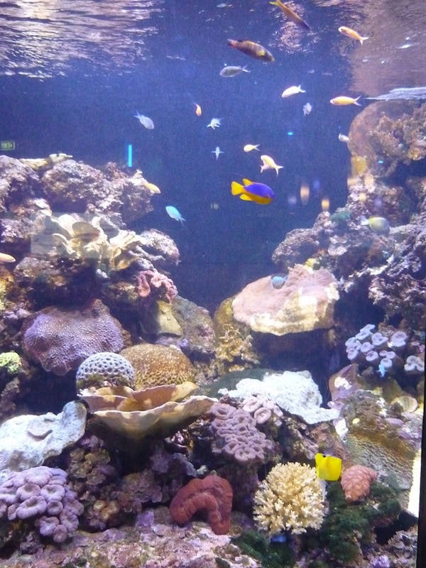 Townsville Reef HQ Aquarium