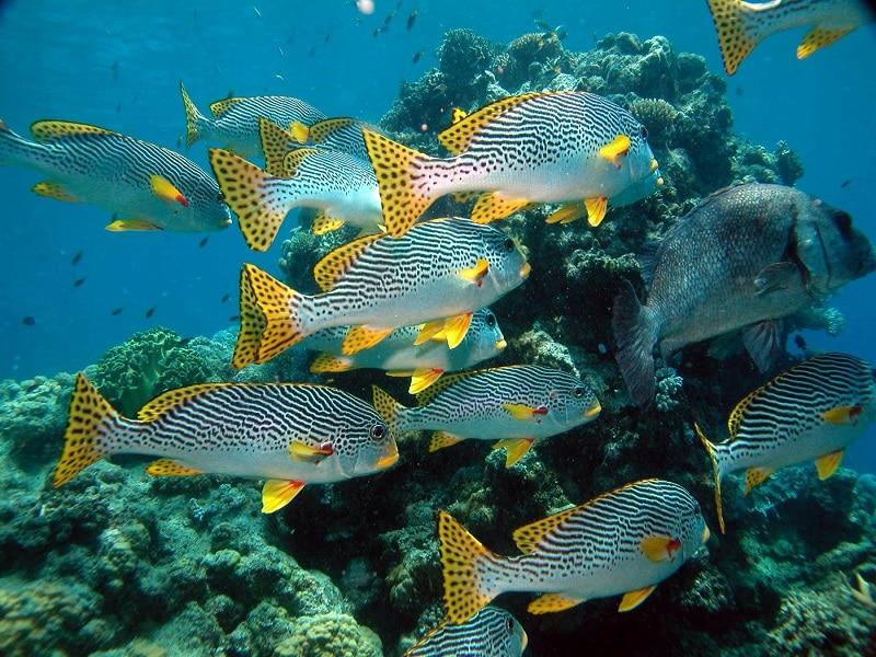 Snorkelen Whitsunday eilanden Australië