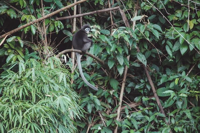 Wildlife spotten Khao Sok Thailand