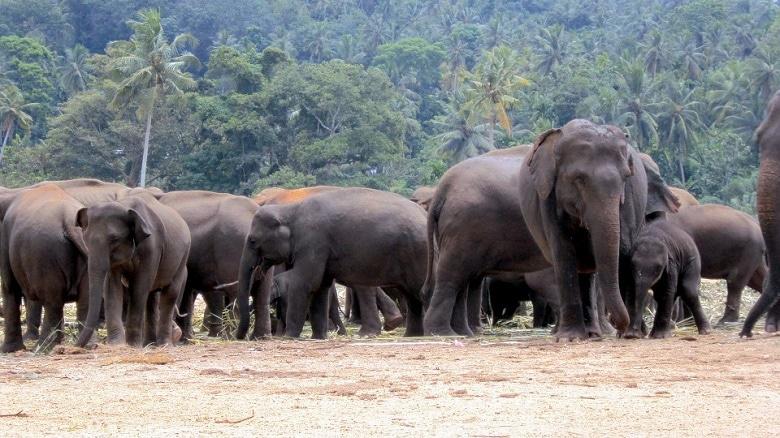 olifanten spotten sri lanka