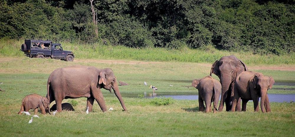 Sri lanka nationale parken olifanten