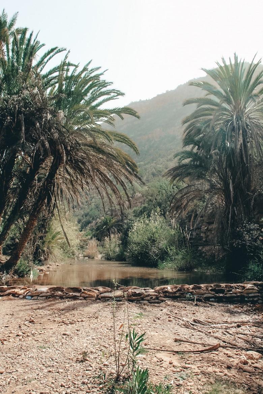 Palmbomen Paradise Valley Marokko