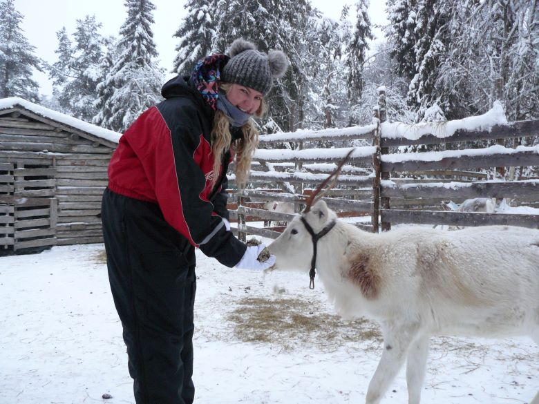 Finland Rendier Tips Excursie Lapland