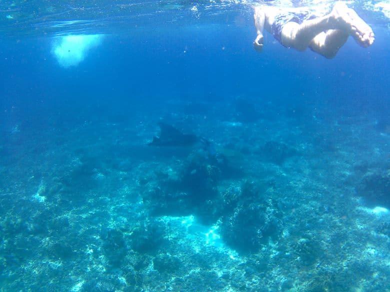 snorkelen op manta point