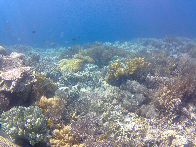 snorkelen in komodo national park flores tips