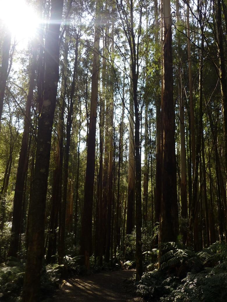 Otway National Park Australië