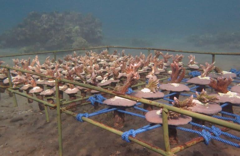 Coral gardening Bali