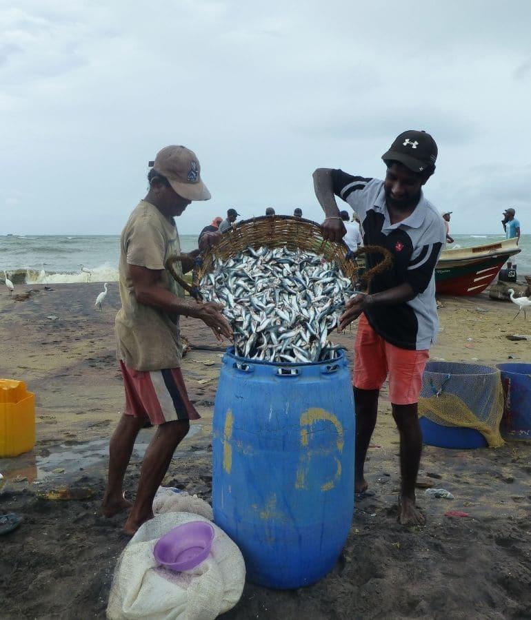 Negombo vismarkt tips