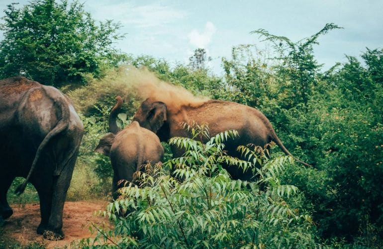 Olifanten Sri lanka tips