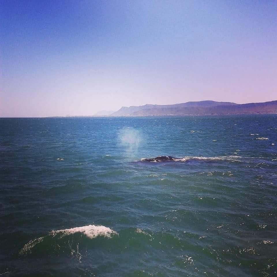 Walvissen spotten Panama