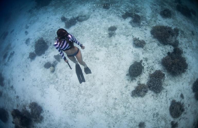 panglao duiken