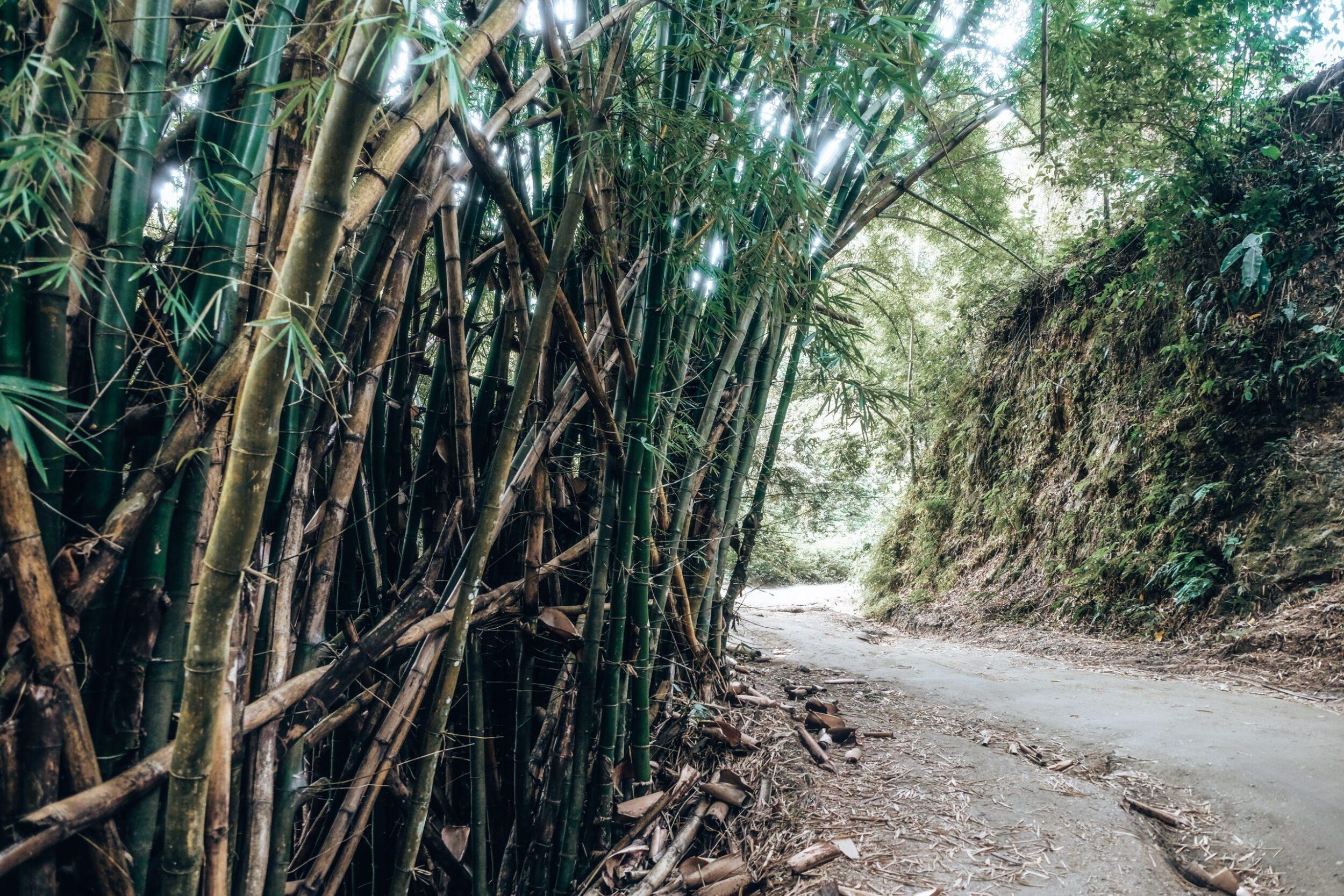 hiken in minca