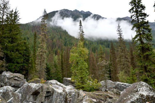 Rockgarden Trail