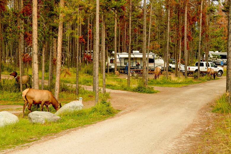 Wapiti campground Jasper