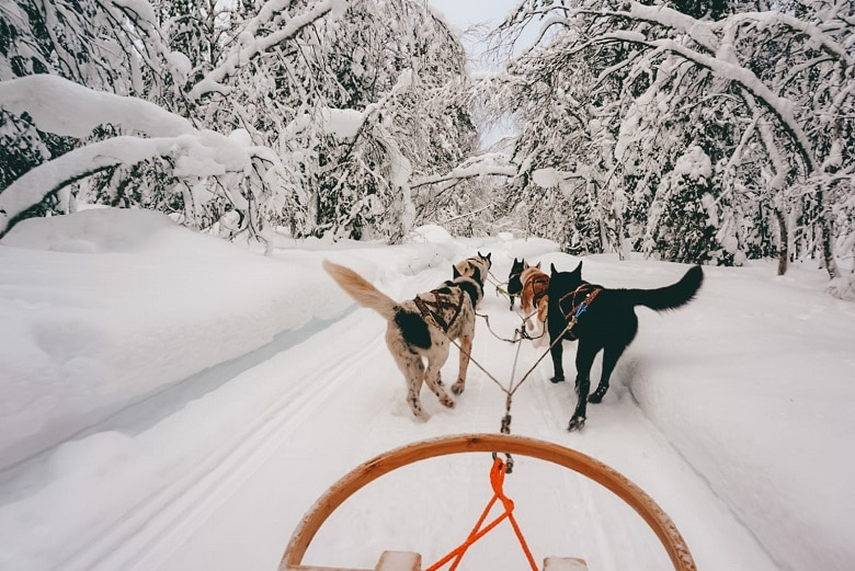Waar husky tocht doen lapland