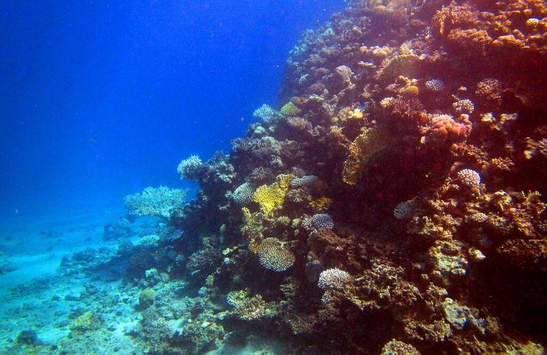 excursies egypte hurghada duiken