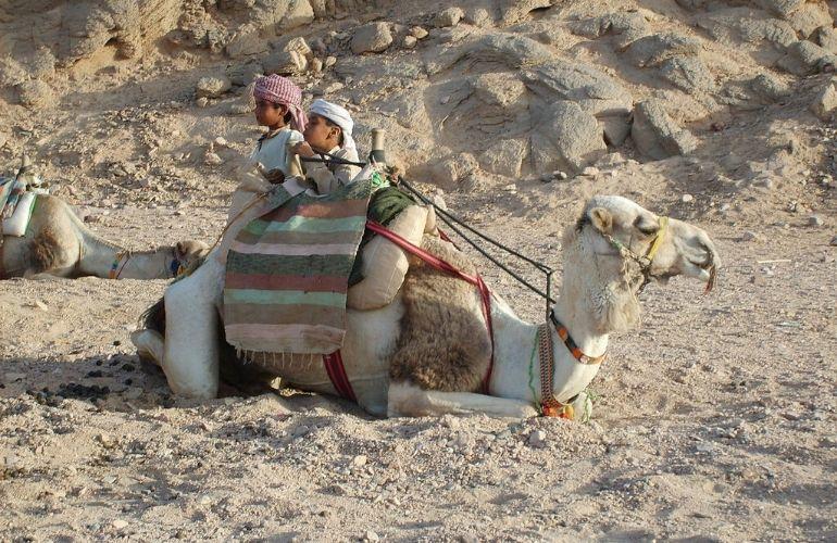 kameelrijden egypte cairo