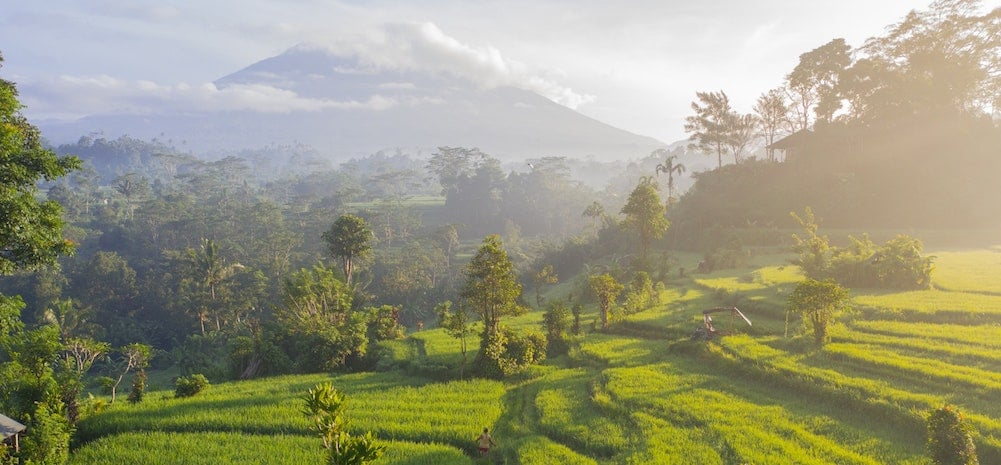 Bali mooiste rijstvelden