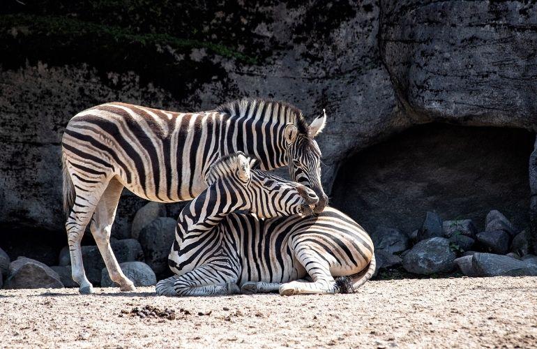 dierentuin arnhem