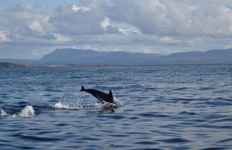 dolfijnen excursie gran canaria