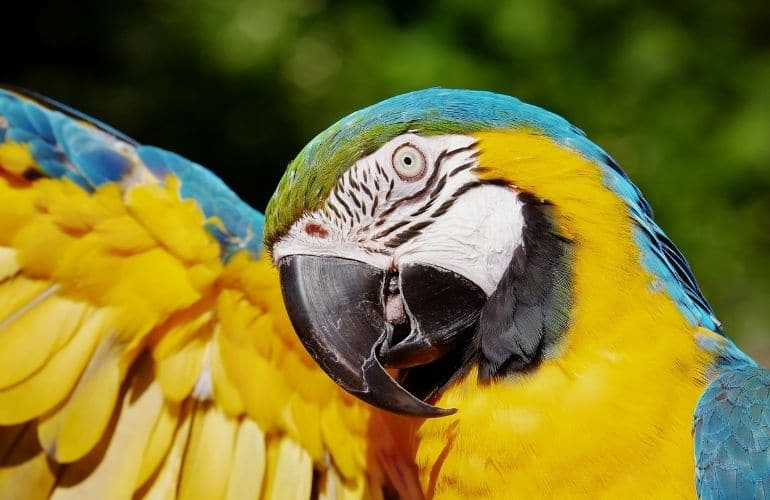 papegaaien tenerife