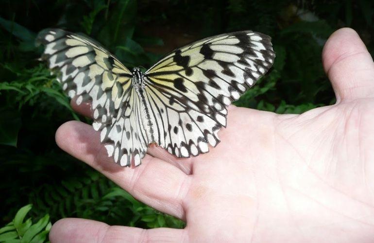 vlinders tenerife